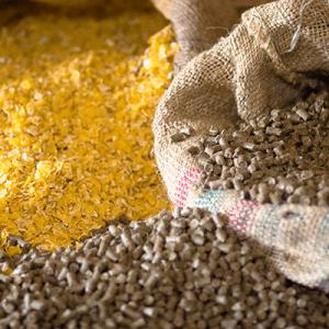 ribbon blender for animal feed in india